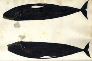 Painted whales